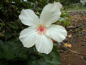hawaii2007142.jpg