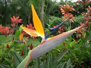 hawaii20071843.jpg