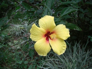 hawaii20072246.jpg